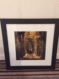"""Picture / stunning Woodland picture / expensive Frame John Lewis 18"""" x 18"""""""