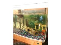 Large fish tank for sale with 6 cold water fish