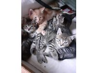 Kittens for sale, ready to go
