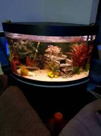 Tank with stand, fish and all accessories