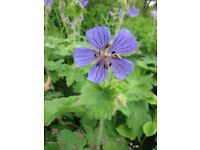 various flowers and garden plants for sale