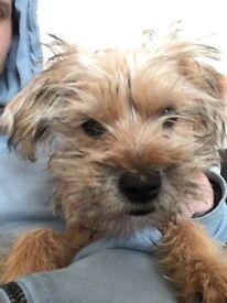 Puppy 5 months old