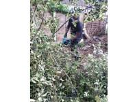 tree surgeon and garden clearance