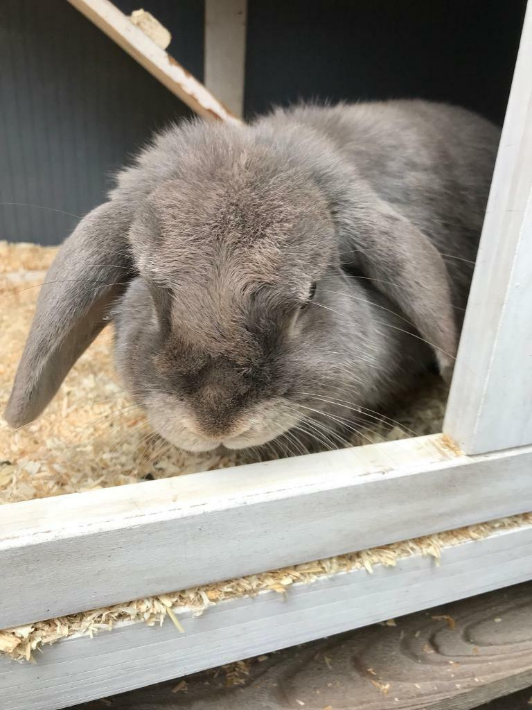 Mini loop. Rabbit