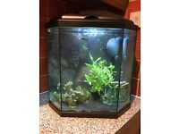 Danio fish/armano shrimp for sale (incl. tank)