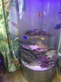Contents of marine tank for sale