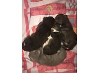 Four beautiful kittens for sale