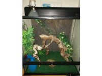 Large Vivarium for reptiles. Heat lamp and mat - thermostat-branch-backing-carpet-dish-spray-plants