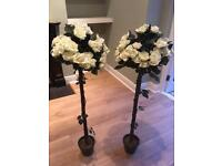 Rose bushes for event or wedding