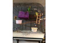Birds budgies male female plus cage