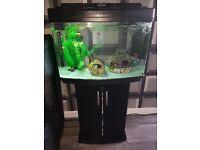 Fish rank full setup with fish babys ect