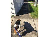 Dog Walking Stranmillis / Malone Rd / Botanic Area