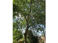 Tree cutting ,tree surgeon, rubbish removal ,house removals