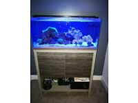 Fluval m90 marine tank and contents