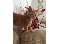 Ginger female