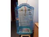 Three Budgies With Cage