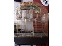 Two cockateils for sale with cage £60