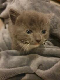 Kittens (beautiful colours)