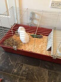 White female rabbit