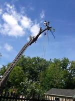 D & J Johnson Tree and Stump Removal Services