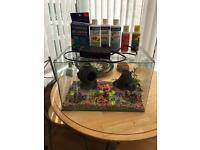 Medium glass fish tank with filter, chemicals and accessories