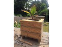 Rustic Plant Pots