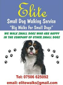 Small dog walking service, Bishopbriggs, East Dunbartonshire Area