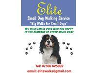 Small dog walking service, Bishopbriggs, East Dunbartonshire Area