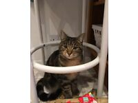 Missing friendly tabby cat (Bonnie) in Loughborough. Please help find