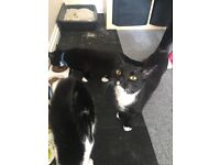 . 2 handsome 8 month old boys looking for a new loving home.