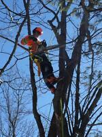 TREE REMOVAL, DANGER TREE CUTTING, INSURED