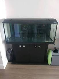 Fluval 240 litre fish tank and stand