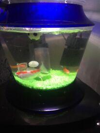 Fish tank full set up