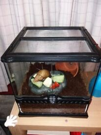 Giant African Land Snail, vivarium and heat mat available to good home
