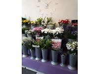 Florists display stands for buckets and also flower vases for sale.