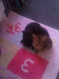 8 week old kittens