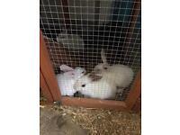 Last rabbit left for sale boy
