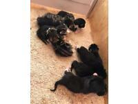 Beautiful litter of 9 kittens