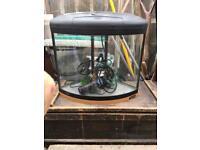 Corner fish tank and filter