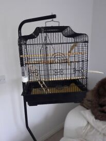 Budgie cage plus two Budgies