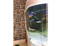 Bullet shaped fish tank