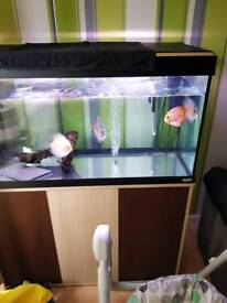 Fluval roma 200ltr complete with stand etc