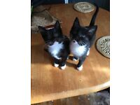 Kittens available £30 for the pair