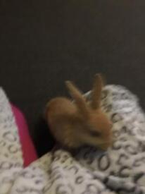 Baby bunnies £25 each