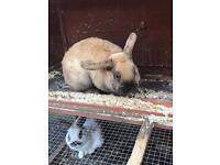 2 beautiful family rabbits