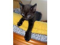Beautiful kitten ready to go