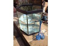 Hexagonal forty litre glass fish tank,
