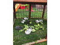 8 x baby rabbits