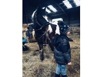 Horse for Share/ Part loan