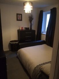 Double furnished bedroom